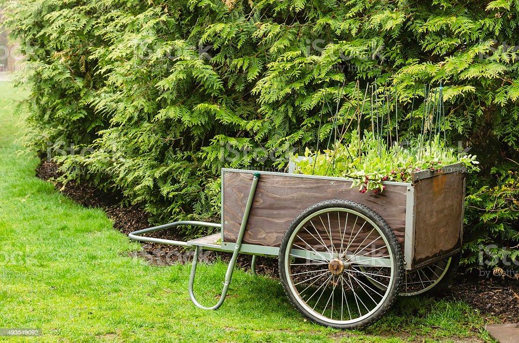 Garden handcart stock photo