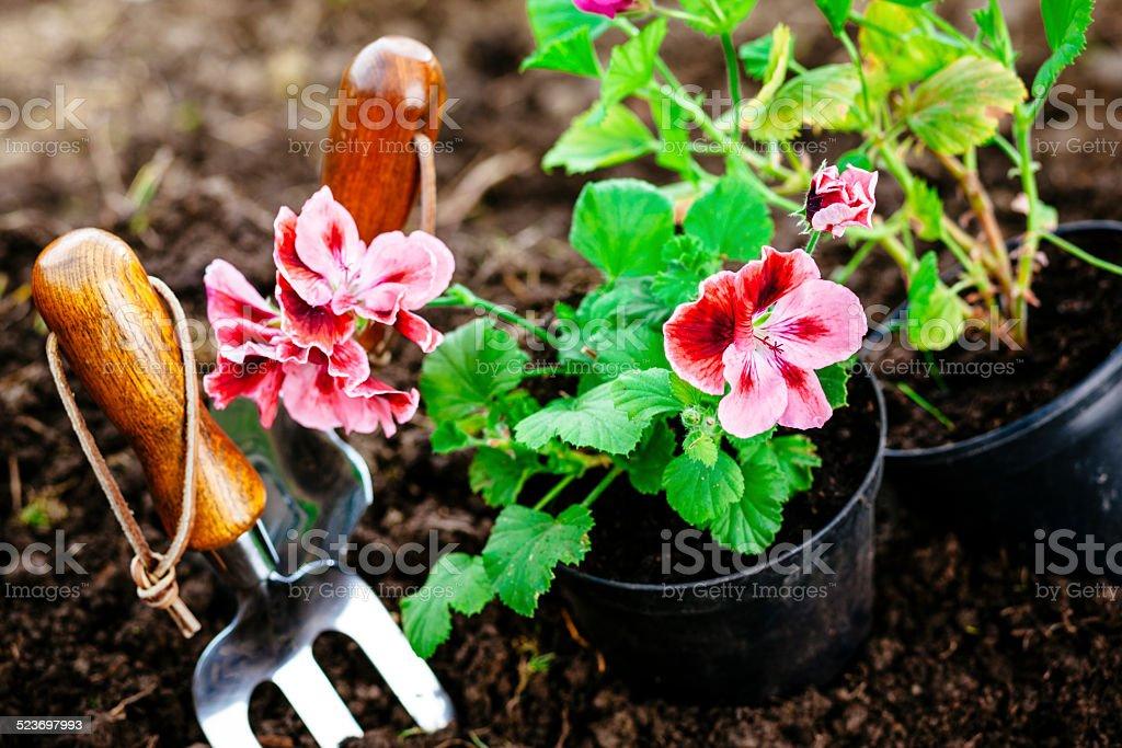 Garden handfork mit Pflanzen – Foto