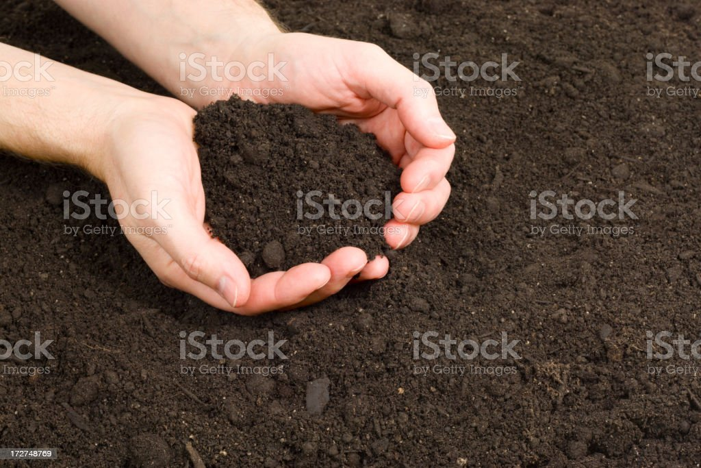 Garden Hands royalty-free stock photo