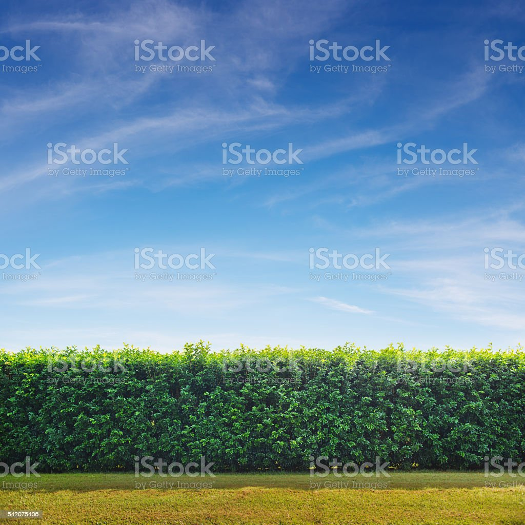 Garden Hedge stock photo
