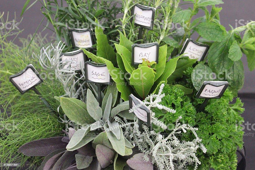 Garden herbs, fennel, curry-plant, bay, purple-sage, parsley, lemon-balm, rosemany, tarragon stock photo
