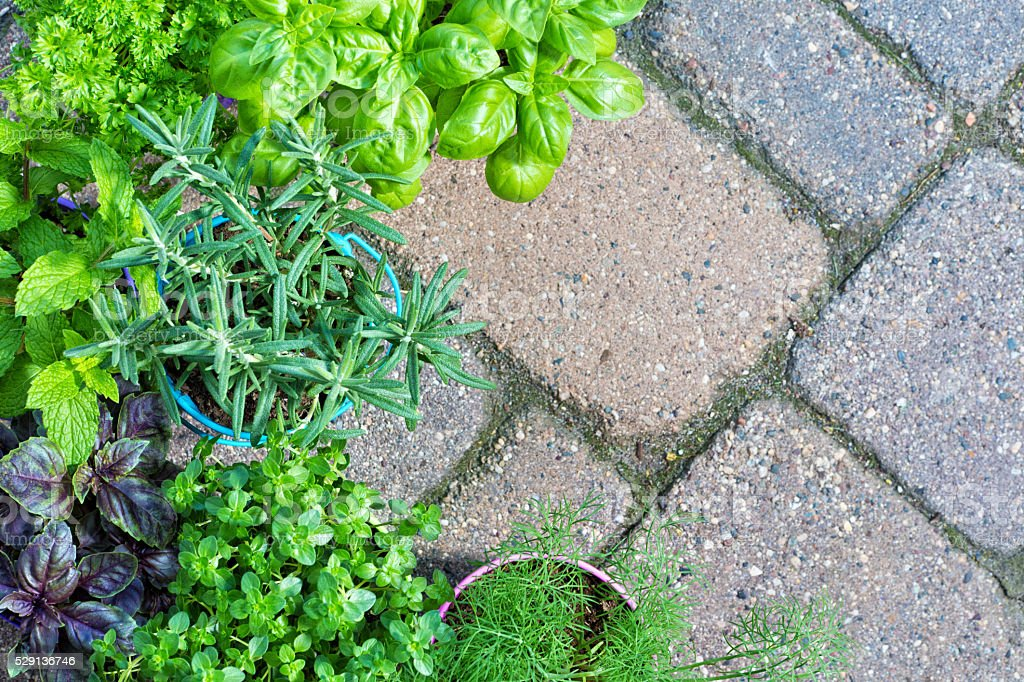 Garden Herbs on Brick Background with Copy Space stock photo
