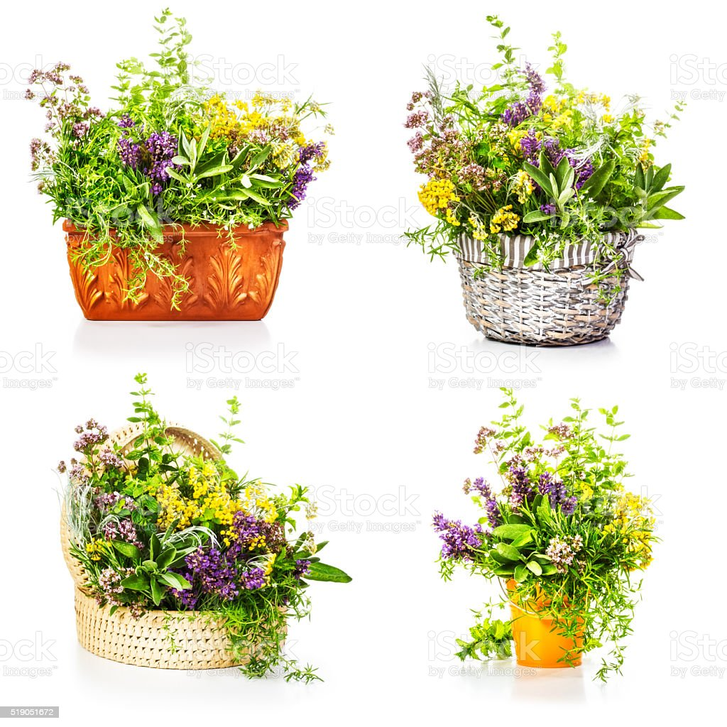 Garden herbs stock photo