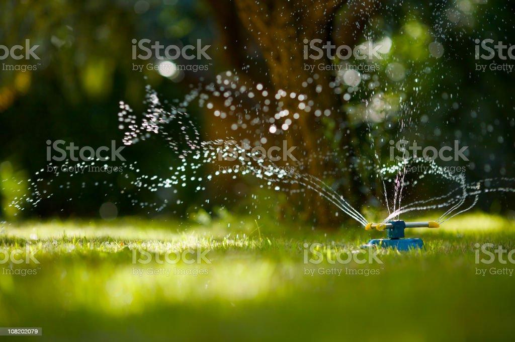 Tuyau d'arrosage de jardin - Photo