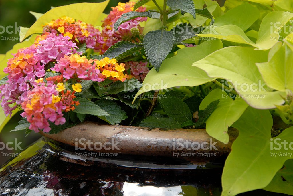 Garden in a Ceramic Pot stock photo