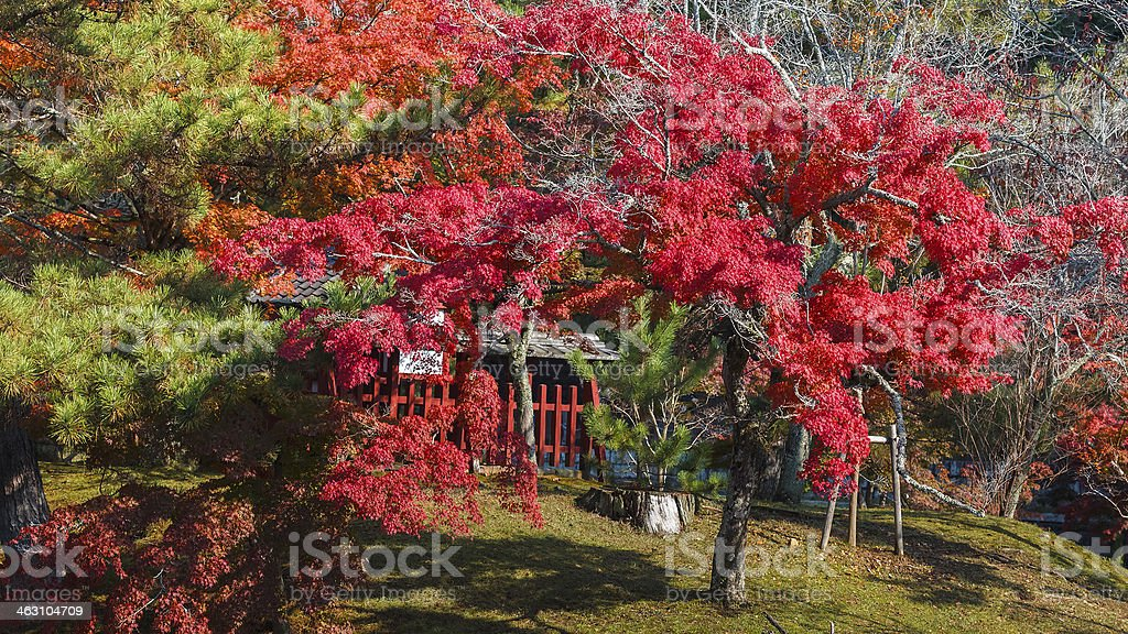 Garden in front of Todaiji Temple stock photo