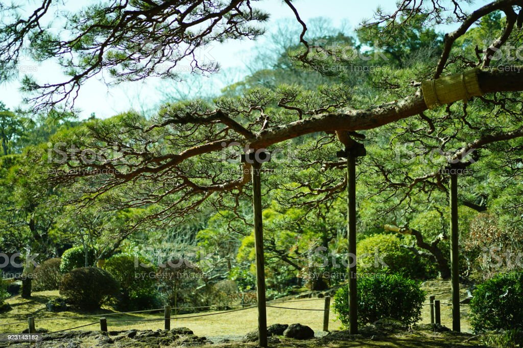 A garden in Mishima stock photo