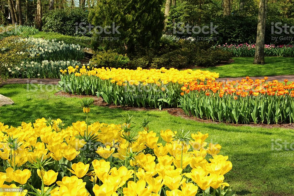 Garden in springtime royalty-free stock photo