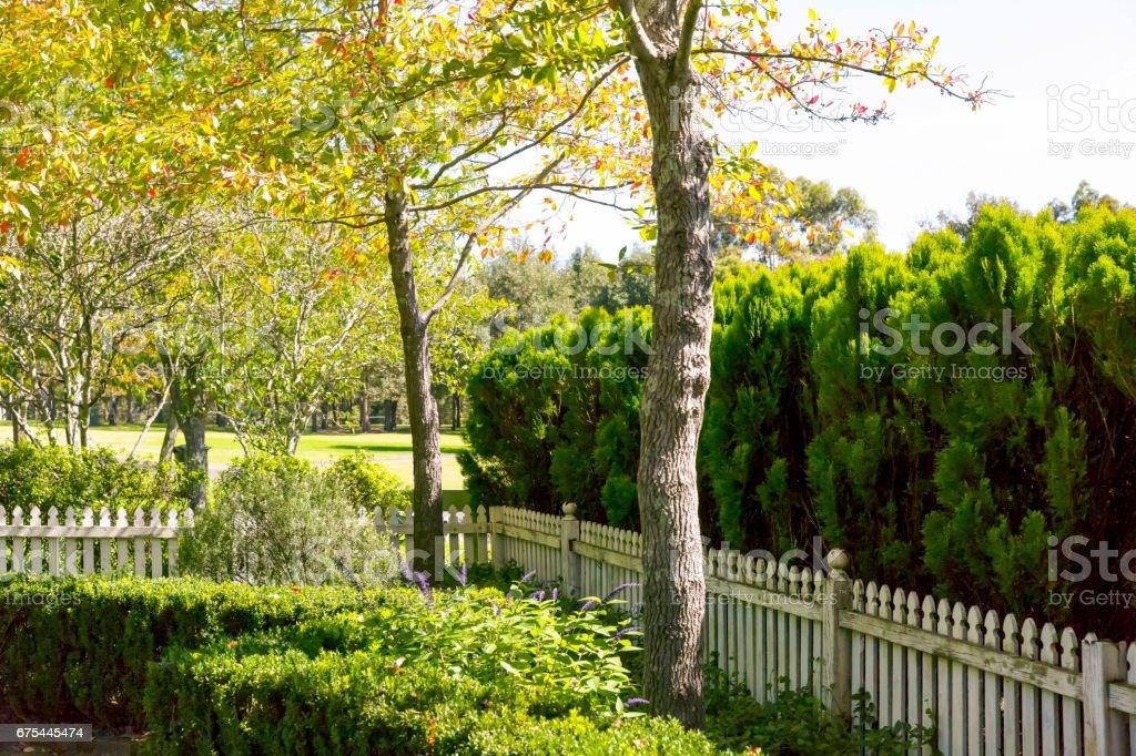 Yaz güneşi, kopya alanı ile arka bahçede royalty-free stock photo