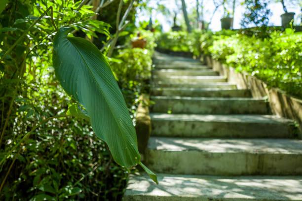 A garden in the Canggu area of Bali stock photo