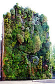 This vertical garden is located in central Madrid and was designed by Swiss artist Patrick Blanc in 2006. There are 15,000 plants from more than 250 different species. This garden represents a very unusual encounter between the rough of modern buildings and nature.