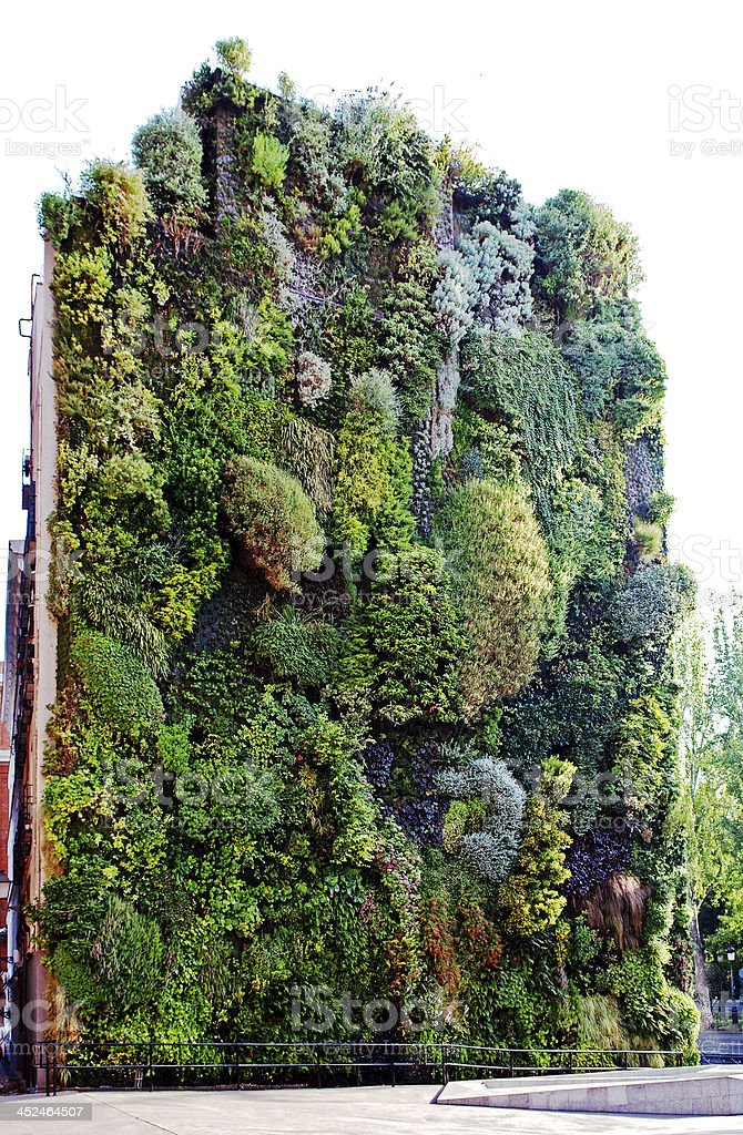 Garden in vertical position. stock photo