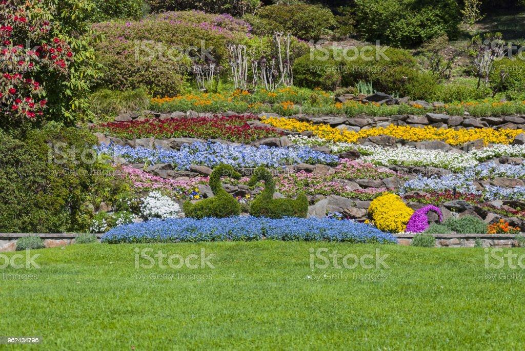 garden in Villa Carlotta, Lake Como, Italy. stock photo