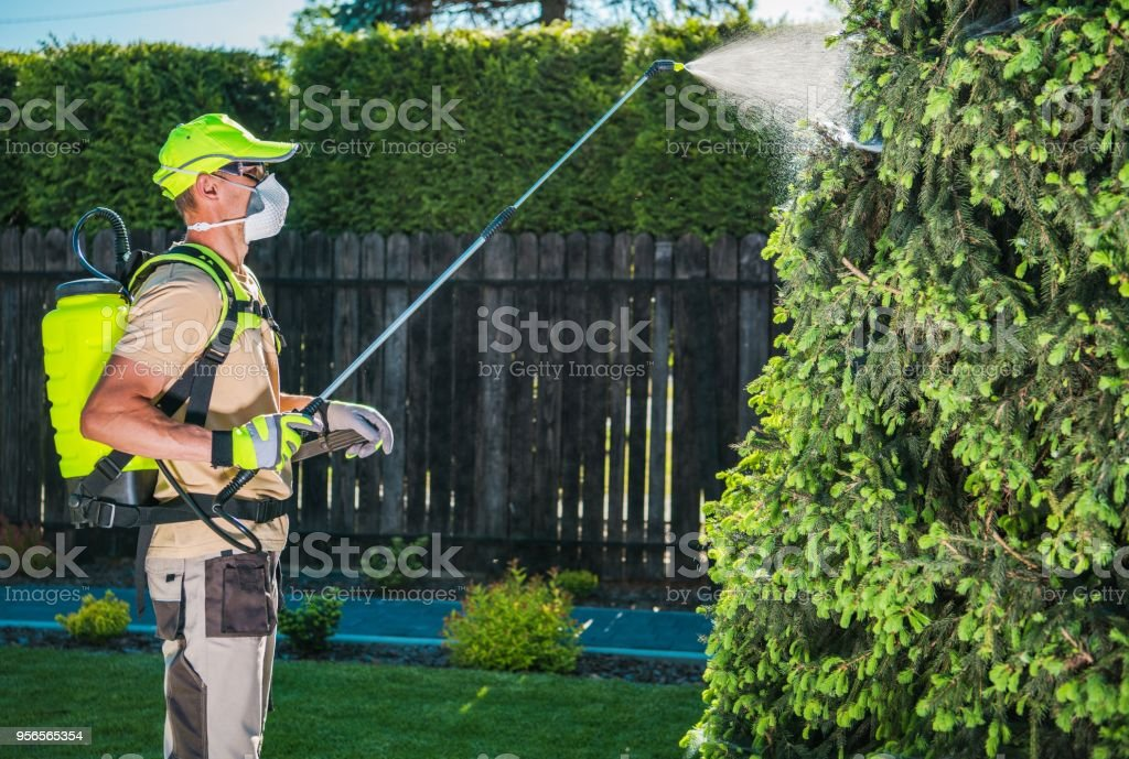 Garden Insecticide by Spraying stock photo