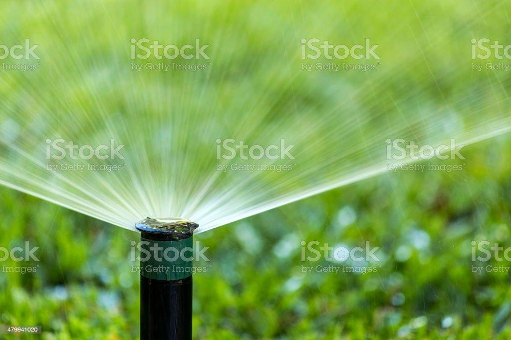 Système d'Irrigation de jardin sur la pelouse au bord de l'eau. - Photo