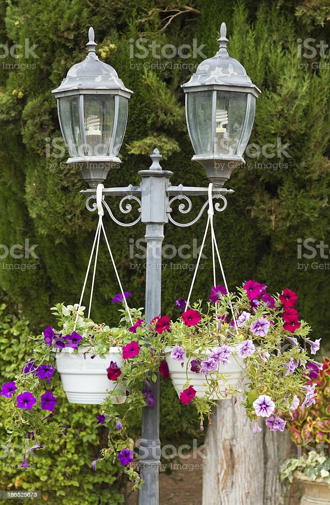 Garden lamp and  Petunia flowers royalty-free stock photo