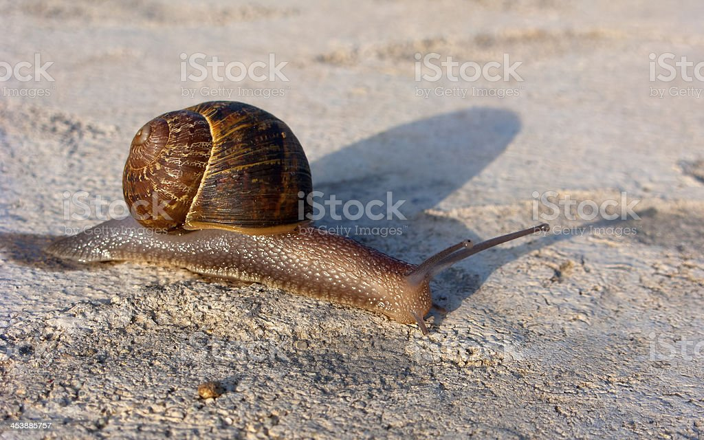 Garden Land Snail royalty-free stock photo