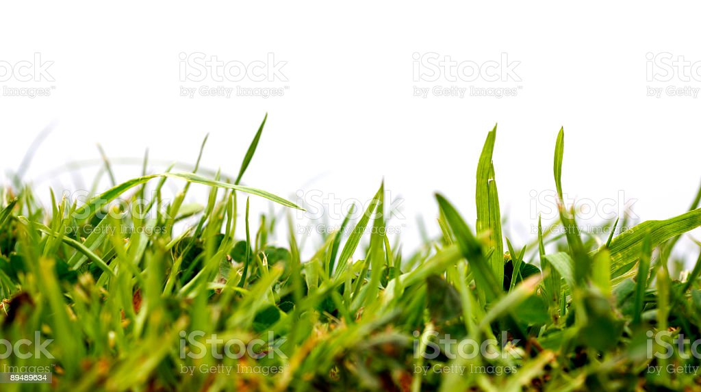 Garden lawn against white royalty-free stock photo