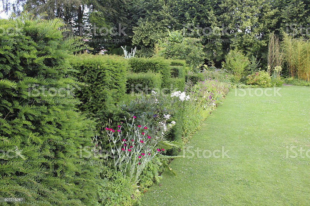 Garden lawn pathway, herbaceous border flowers, stachys, clipped-yew topiary hedge royalty-free stock photo