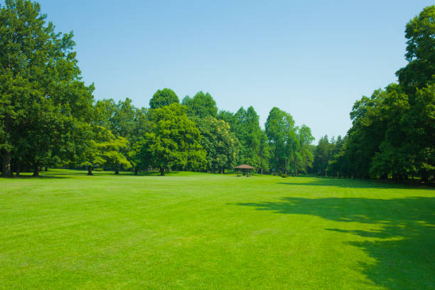 garden lawn Sunny garden satoyama scenery stock pictures, royalty-free photos & images