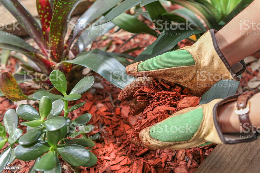 garden maintenence with mulch red timber woodchip stock photo