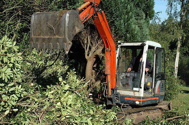 Garden - Mechanical digger Tracked excavator clearing vegetation glade stock pictures, royalty-free photos & images