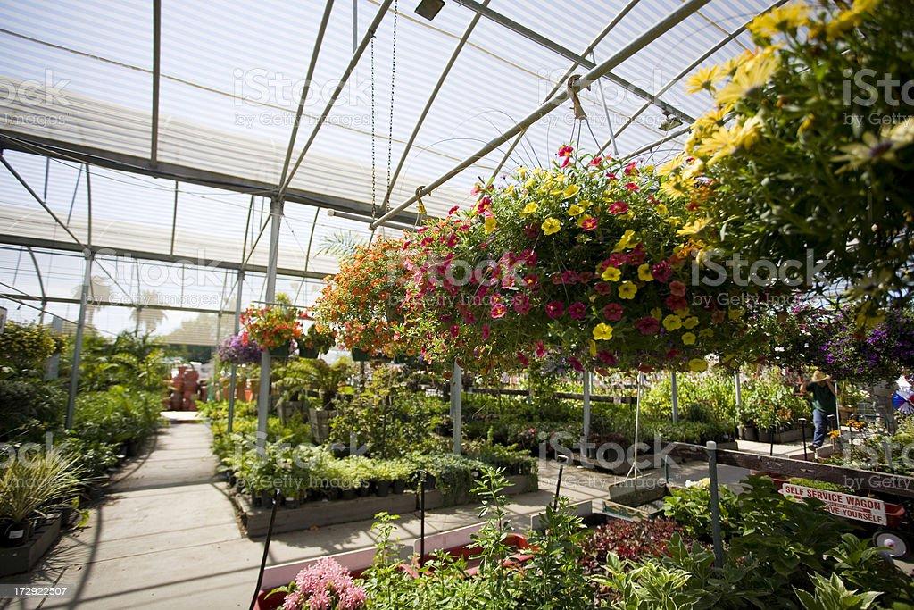Garden Nursery royalty-free stock photo