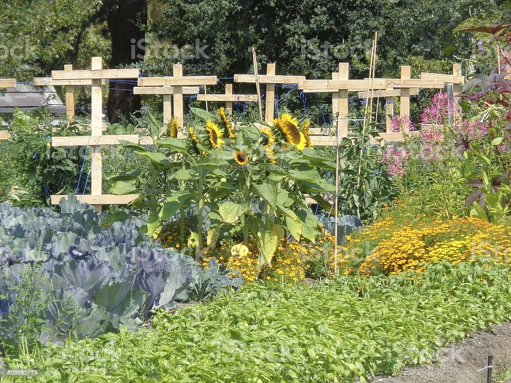 Garden of flowers, cabbage and wooden crosses stock photo
