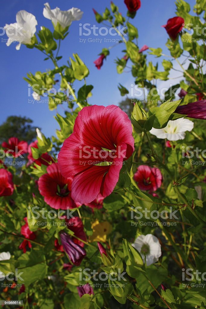 Garden of flowers royalty-free stock photo