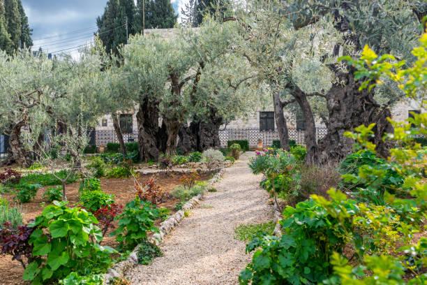 Garden of Gethsemane - pathwalk stock photo
