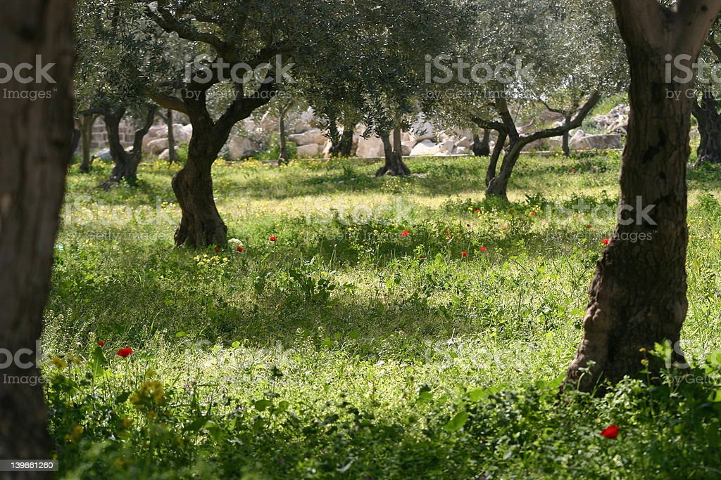 Awesome Garden Of Gethsemane Stock Photo Nice Ideas
