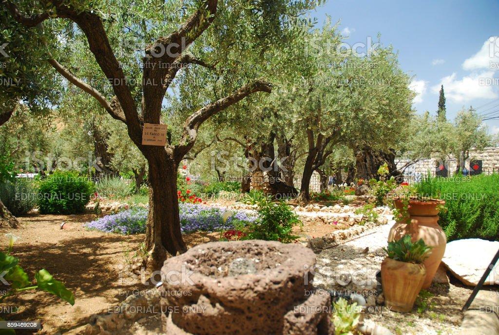 Wonderful Garden Of Gethsemane Stock Photo Design Ideas