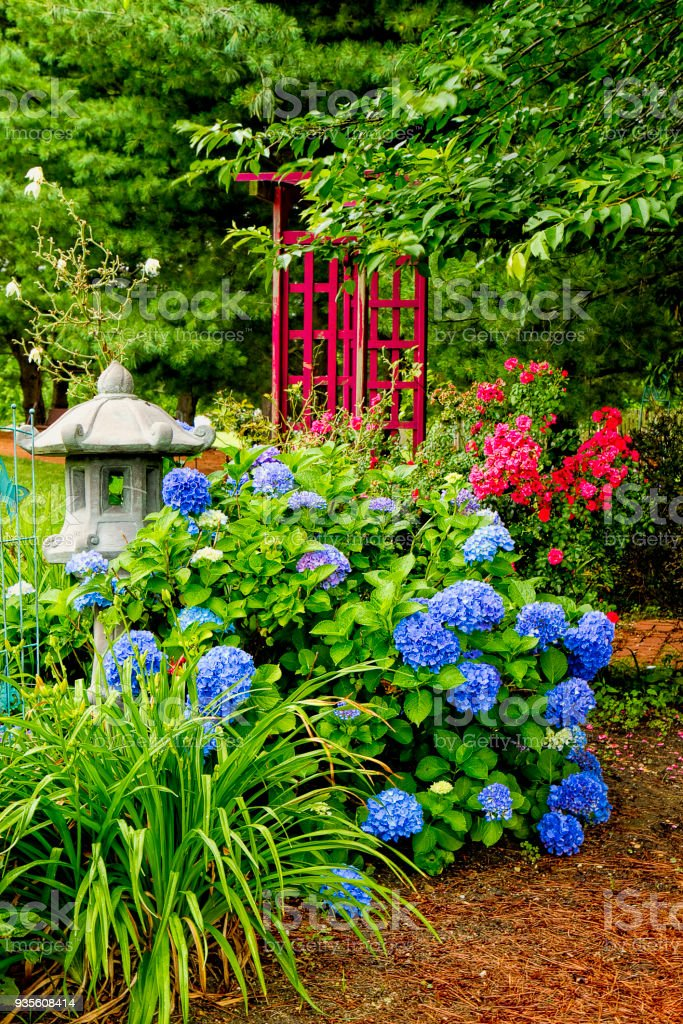 Garden Of Hydrangeas And A Small Pagoda Stock Photo Download