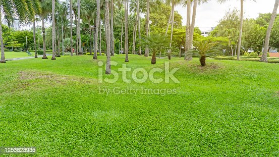 Garden of palm tree on green grass lawn under cloudy sky in good care maintenance landscape of public park