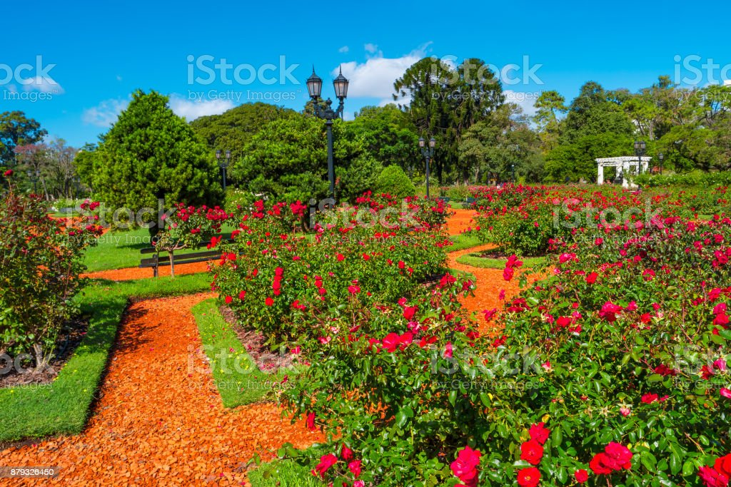 Garden of roses in Palermo district, Buenos Aires, Argentina, summer