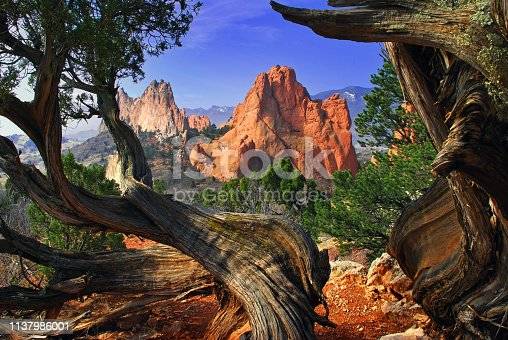 I captured the Garden of the Gods Giant Rock formations from atop white rock ridge carefully framed between two twisted Juniper trees, March 2007 Colorado Springs, Colorado.