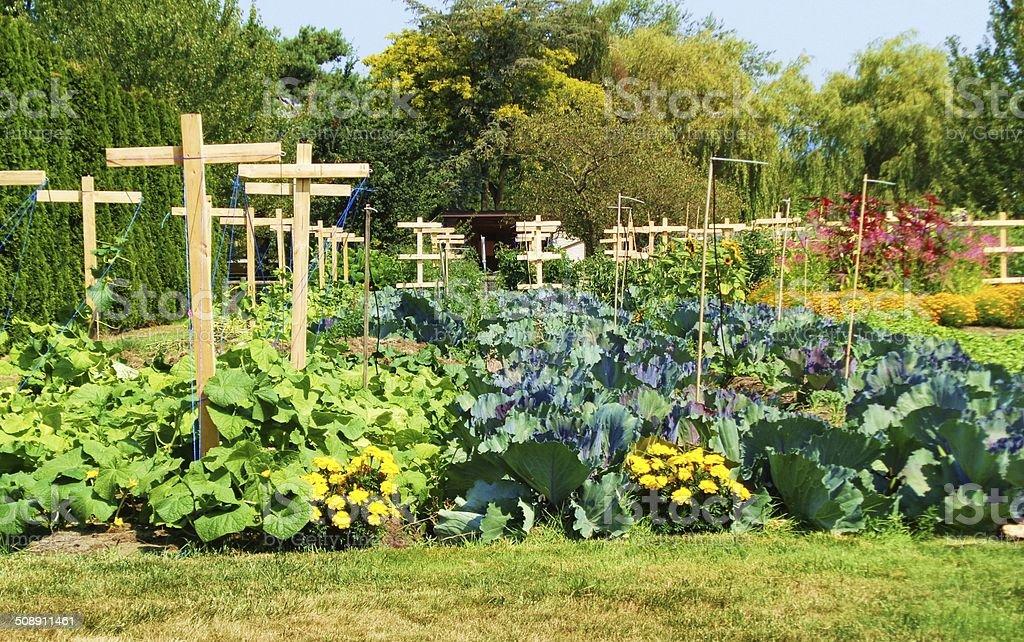 Garden of wooden crosses stock photo