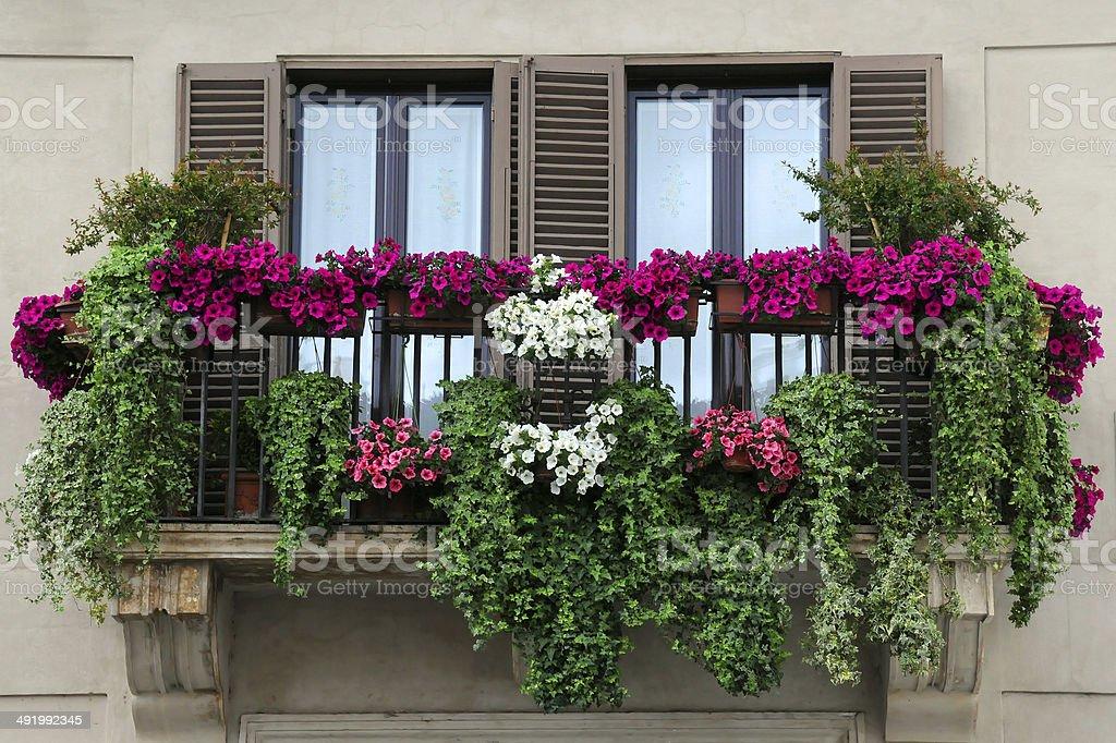 Garden on the Balcony stock photo