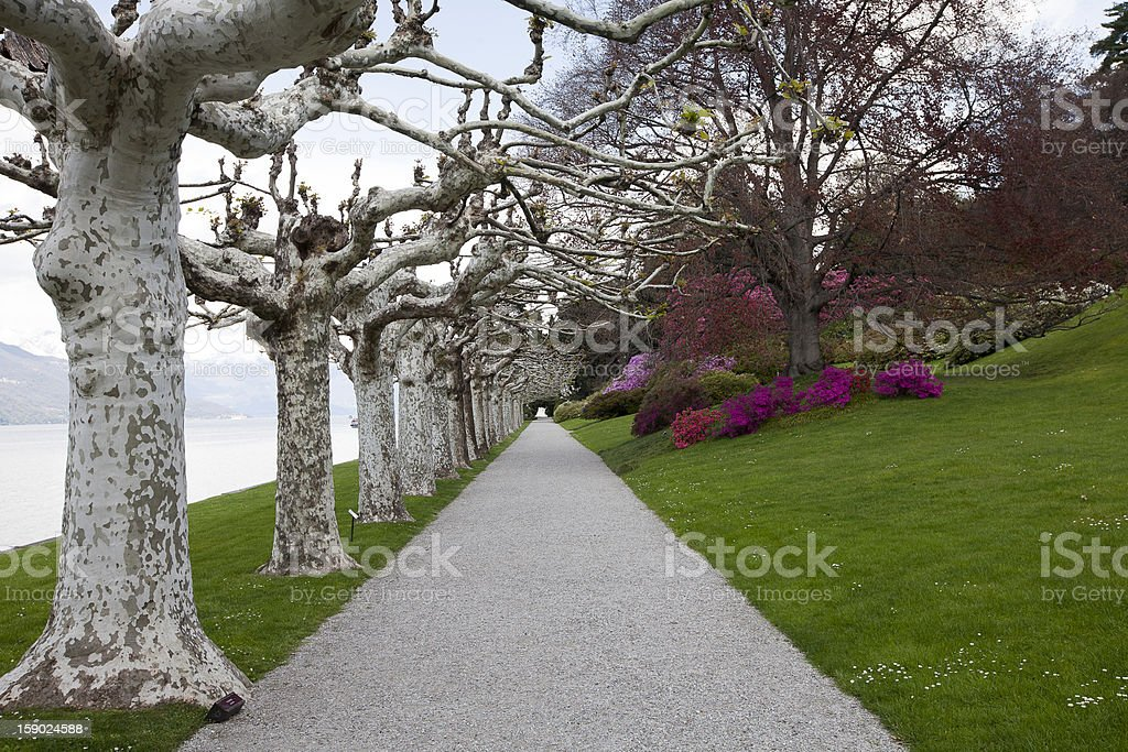 garden on the lake royalty-free stock photo