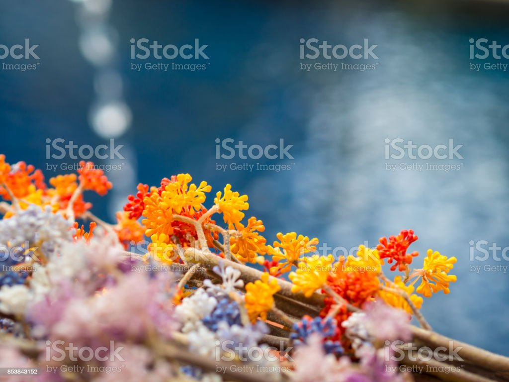 Garden orange blue and pink color flowers on blue water swimming garden orange blue and pink color flowers on blue water swimming pool background for copy izmirmasajfo