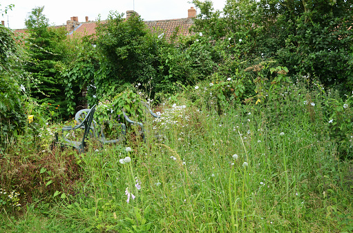 garden overgrown with weeds and plants patio chairs obscured by overgrowth
