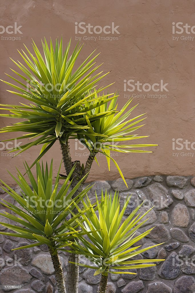 Garden Palm royalty-free stock photo