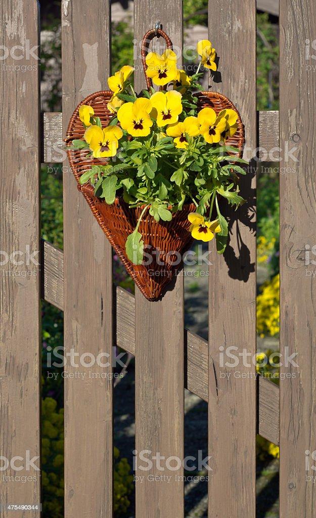 Garden Pansy Decoration stock photo