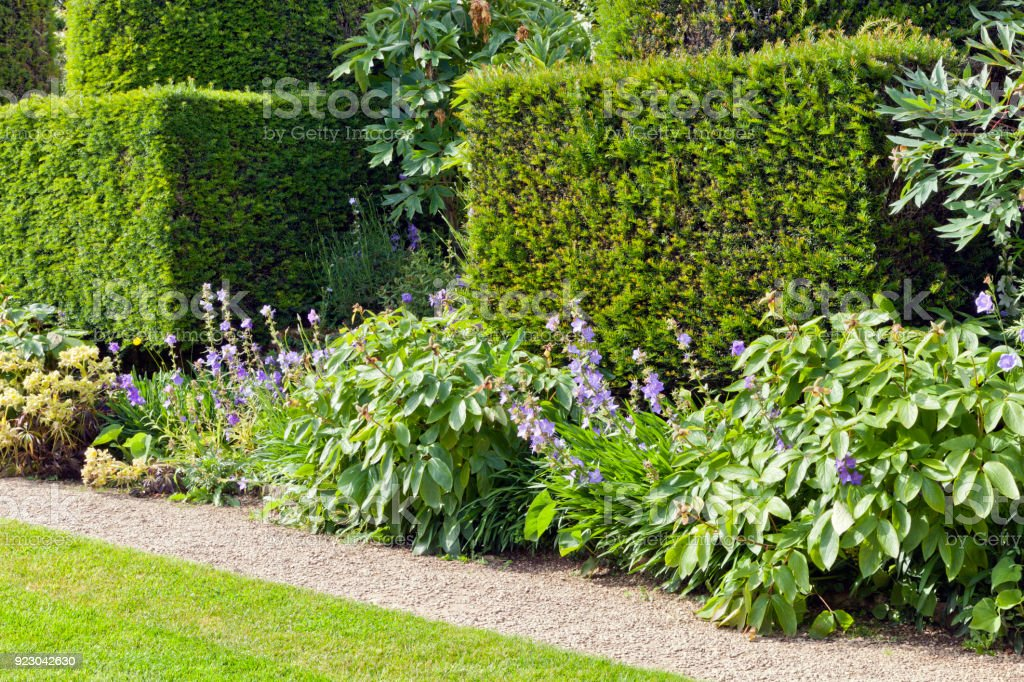 Garden path by a trimmed yew hedge, shrubs and flowers in bloom . stock photo