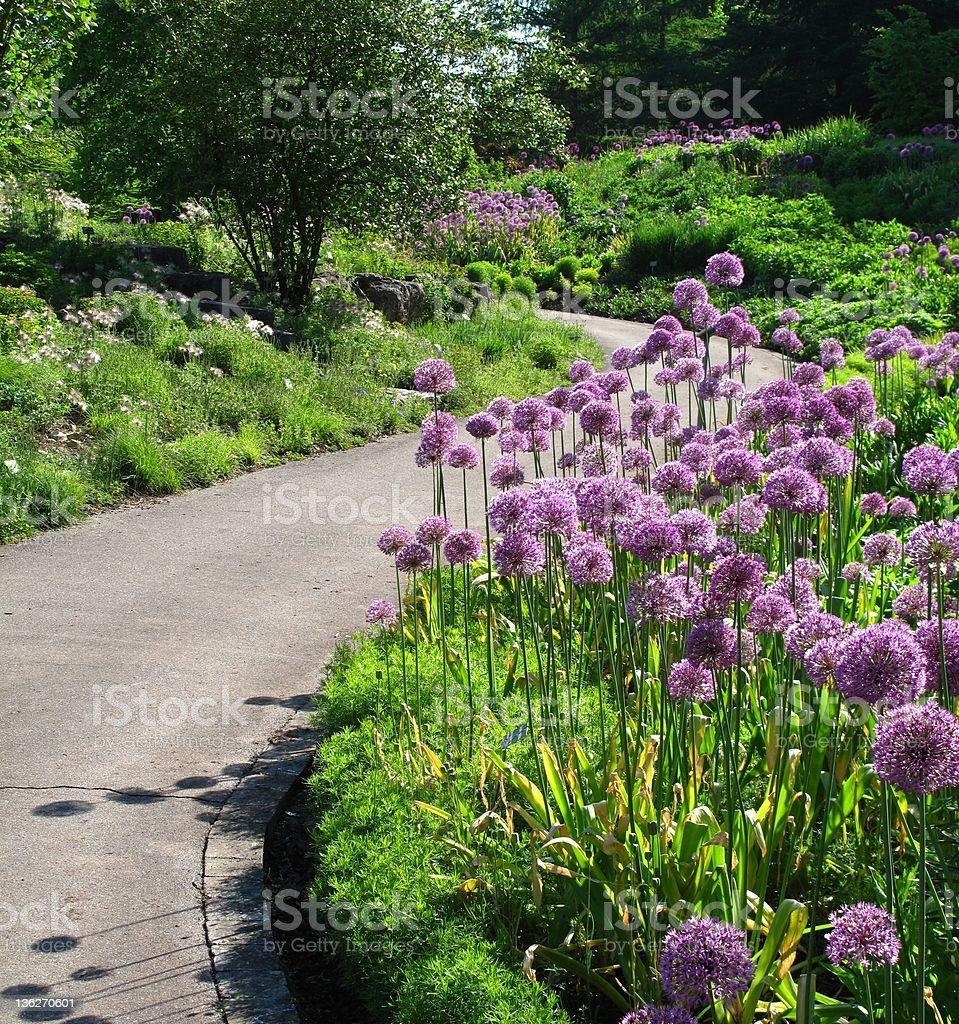 Garden path in springtime royalty-free stock photo
