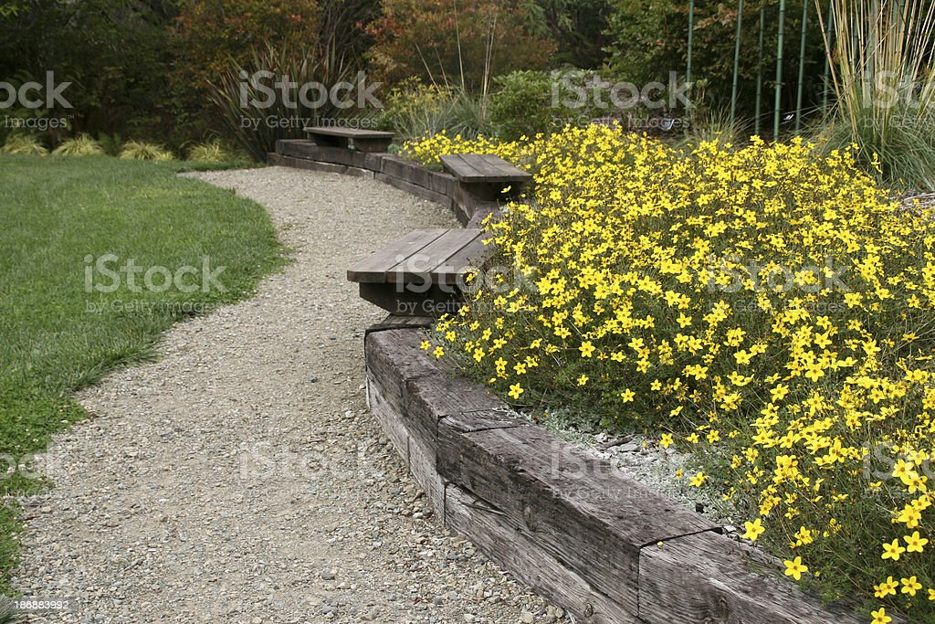 Garden Path Lined with Angelica strica royalty-free stock photo