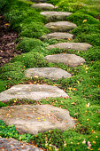 Steps made of stones in green fluffy moss