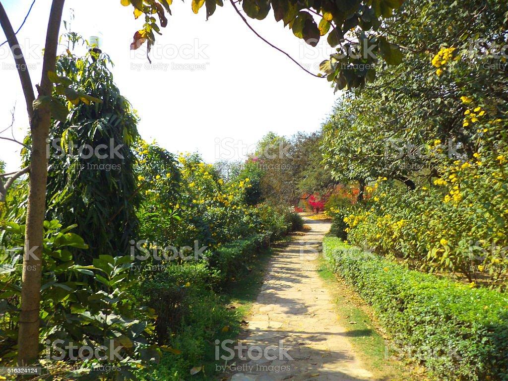 Garden Path Stock Photo Download Image Now Istock