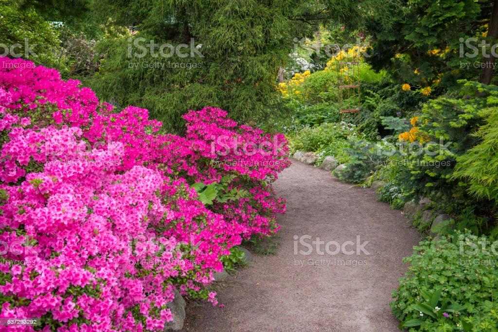 Garden path bildbanksfoto