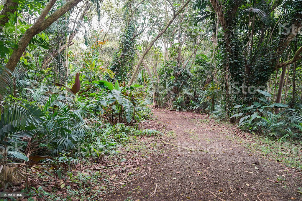 Garden Path through Hawaiian Rain Forest stock photo